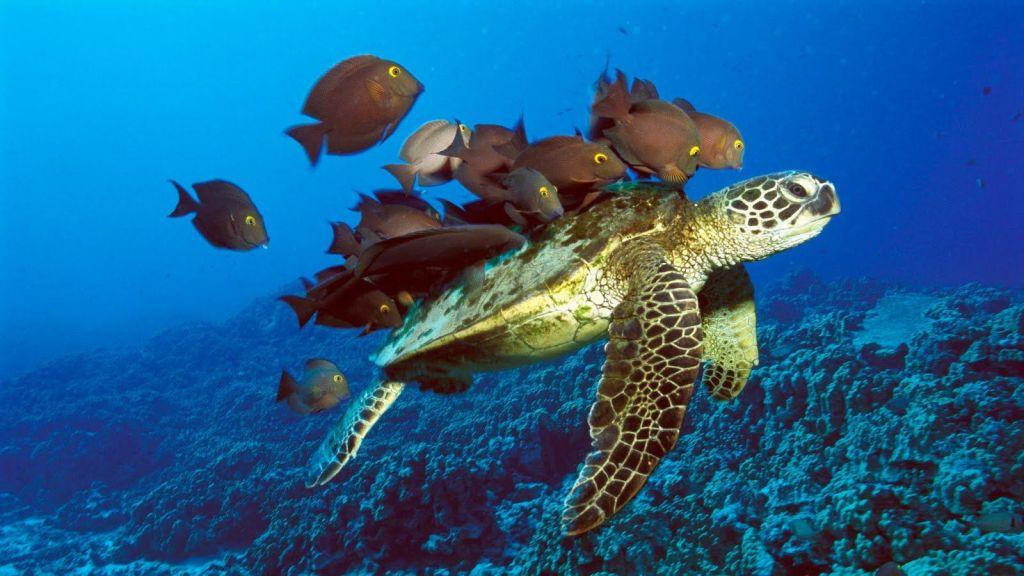 ecosistemas marinos Ecosistemas terrestres y costero-marinos las características geológicas y geográficas de panamá permiten la existencia de múltiples ecosistemas que dan abrigo a toda su diversidad biológica.