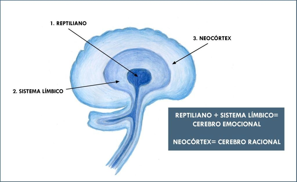 Cerebro reptiliano